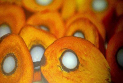 NIFOR SSPE – Palm Fruit Sterilizer